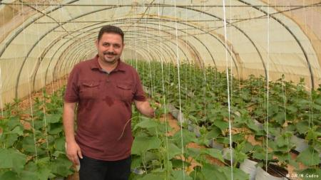 Al Barawi grows cucumbers using the hydroponic technique